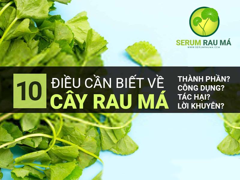10 Điều cần biết về rau má